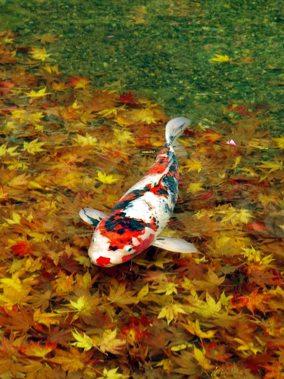 ribe_jesen